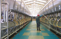 Dairy Farm Group: Redesign of Business Systems and Processes HBS Case Analysis